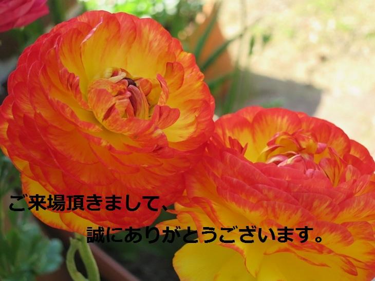 IMG_0424bs