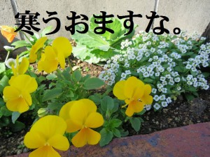 IMG_0762bs