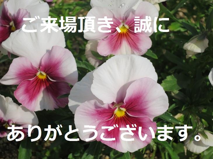 IMG_0429bs