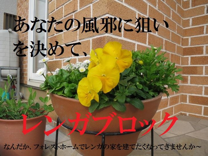 IMG_1065bs