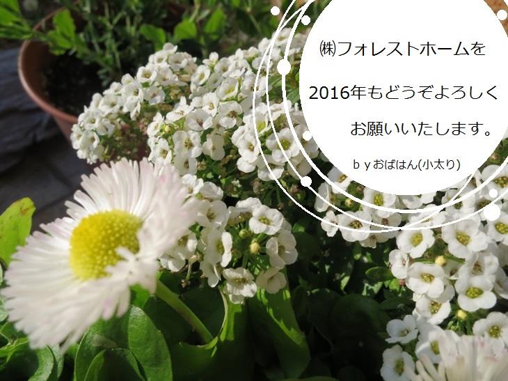 IMG_1151bs