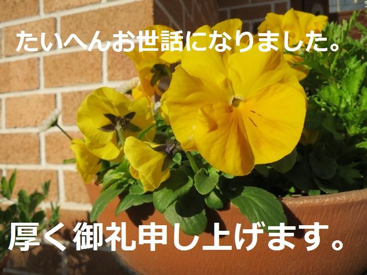 IMG_1157bs