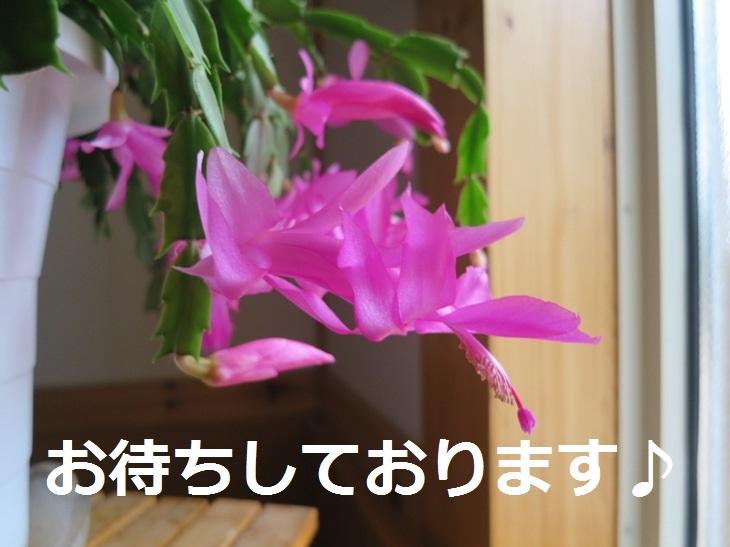 IMG_1321bs