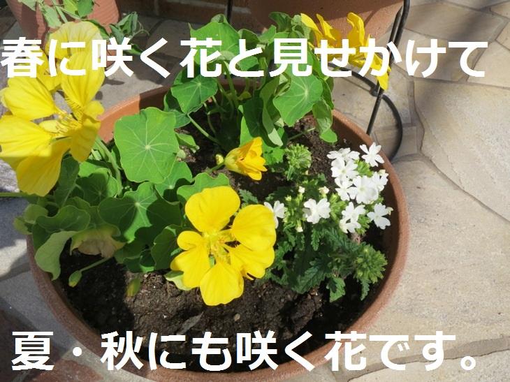 IMG_2214s